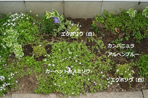 細長い花壇2