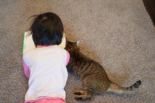 猫と読書 (2)